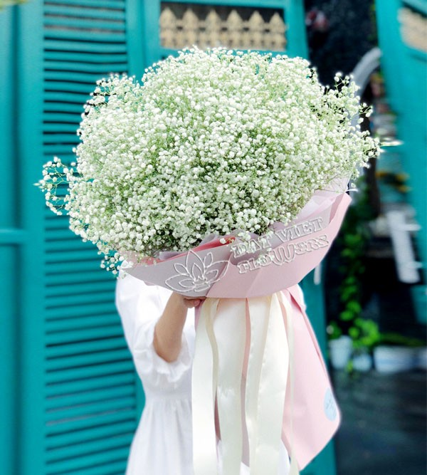 Ý nghĩa hoa baby trắng